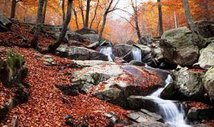 montseny-otoño