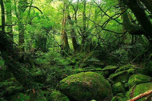 El Bosque de Białowieża en Polonia, el último bosque virgen de Europa Bosque-verde