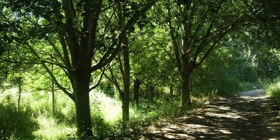 Parque-Natural-de-Collserola