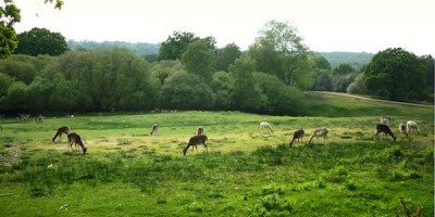 parque-natural-inglaterra-new-forest