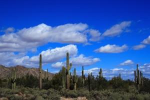Sonoran_desert