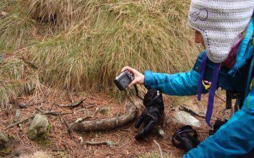 salamandra-comun
