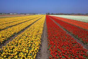 Keukenhof-ruta-de-los-tulipanes