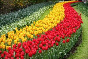 ruta-de-los-tulipanes-holanda