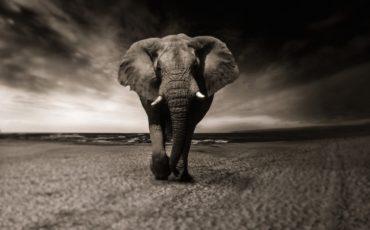 viajes-a-africa