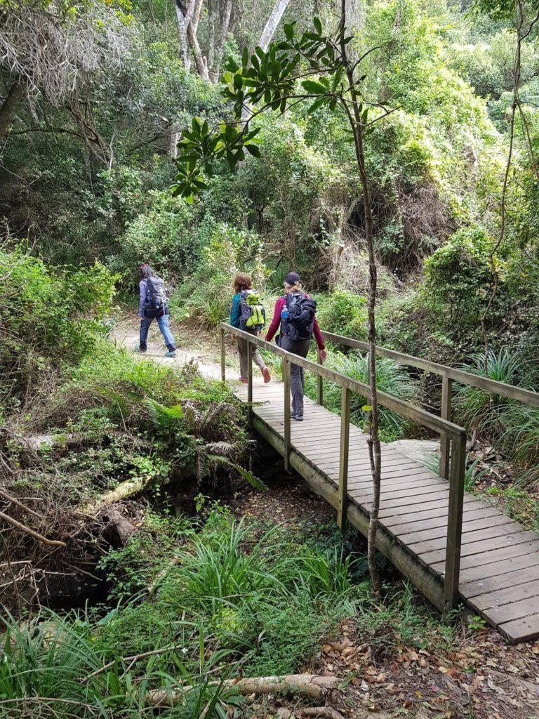 Tsitsikamma Waterfall Trail
