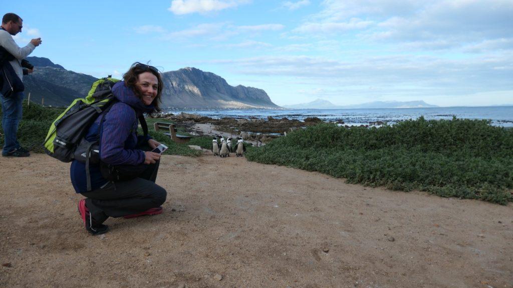 pinguinos_sudafrica