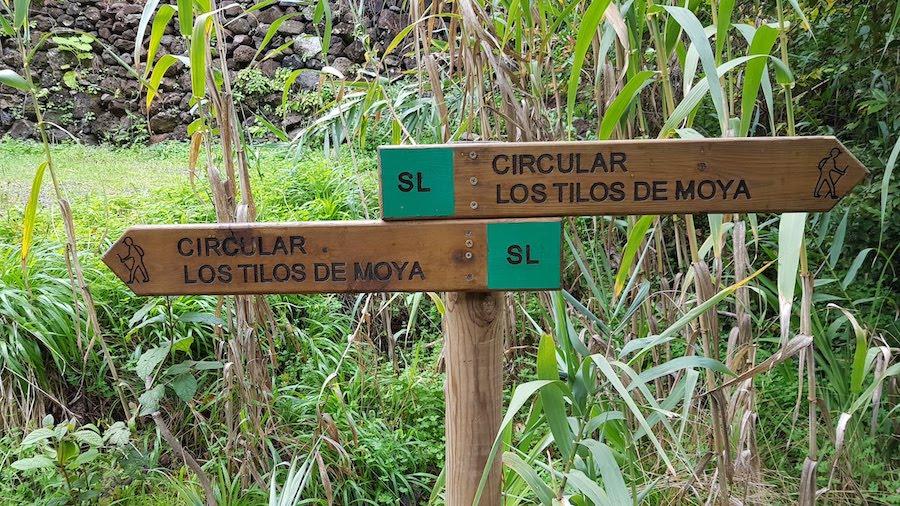 los_tilos_de_moya_en_gran_canaria