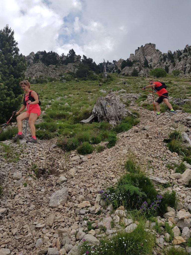 tartera_del_verd